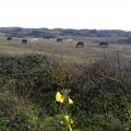Ponies on the Warren Oct2019