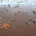 Marine life strewn over beach