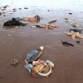 Marine life perishes