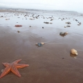 Starfish, clams and much more