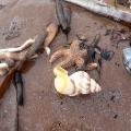 Whelks, starfish & much more