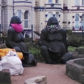 Gorillas in masks