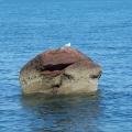 Dawlish bay