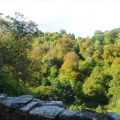 Wooded valley around Berry Pomeroy Castle