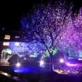 Illuminated Gardens