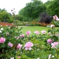 Rose garden at Compton Castle