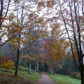 Beech Drive at Killerton, National Trust