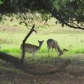 Antlers on the Bucks