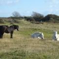 Ponies on the Warren