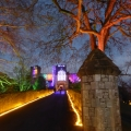 Powderham in Lights
