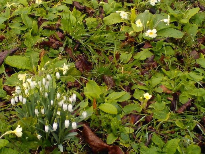 Early spring flowers at powderham sandays bed and breakfastsandays powderham flowers feb 2018 mightylinksfo