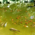 Shaldon pond