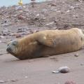 Teignmouth seal