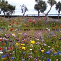 July in Torquay