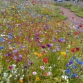 Torquay Flowers