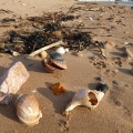 Shells on Dawlish Warren beach